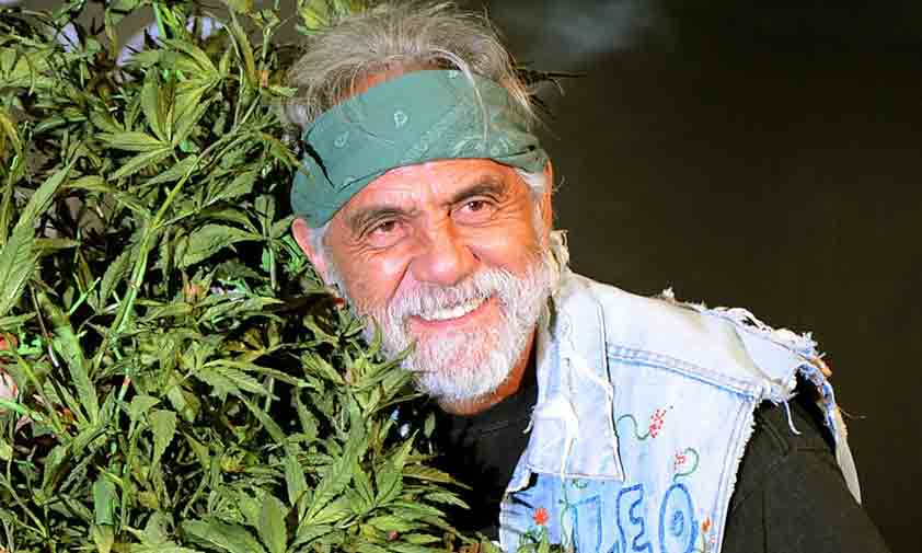 tommy chong cbd oil